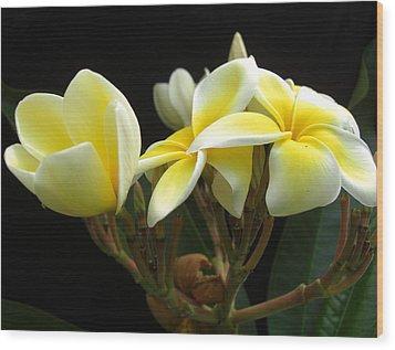 Frangipani Blossoms Wood Print by Frederic Kohli