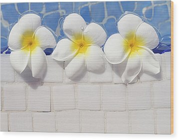 Frangipani Flowers Wood Print by Laura Leyshon