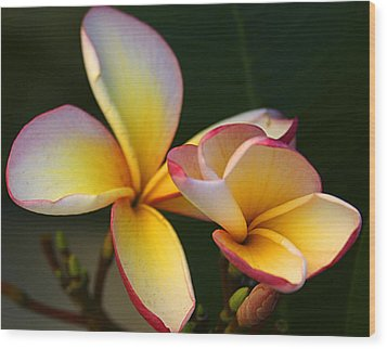 Frangipani Flowers Wood Print by Ralph A  Ledergerber-Photography