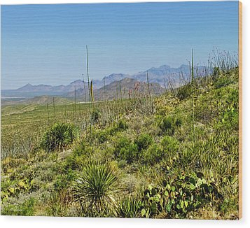 Franklin Mountains State Park Facing North Wood Print by Allen Sheffield