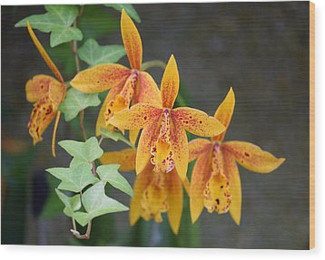 Wood Print featuring the photograph Freckled Flora by Deborah  Crew-Johnson