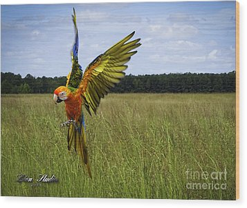Free Flying Wood Print by Melissa Messick
