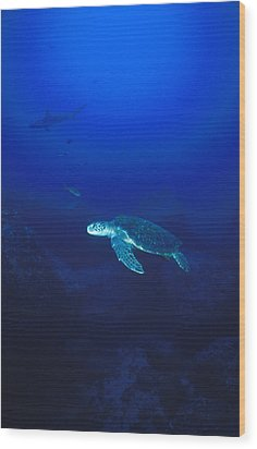 Free Swimming Green Sea Turtle Wood Print by James Forte