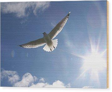 Freedom - Photograph Wood Print by Jackie Mueller-Jones