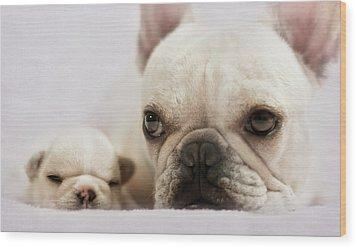 French Bulldog Wood Print by Copyright © Kerrie Tatarka