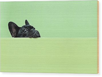French Bulldog Puppy Wood Print by Retales Botijero