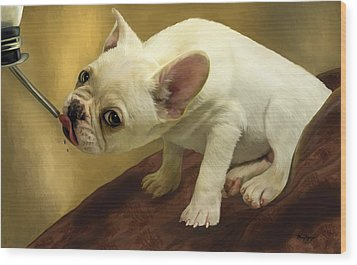 French Bulldog  Wood Print by Thanh Thuy Nguyen