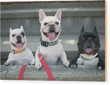 French Bulldogs Wood Print by Tokoro