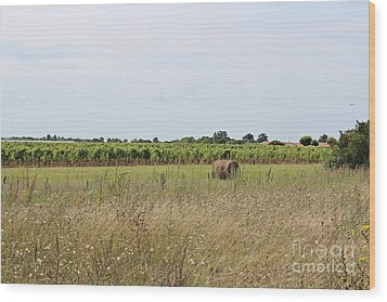 Wood Print featuring the photograph French Countryside by Cendrine Marrouat
