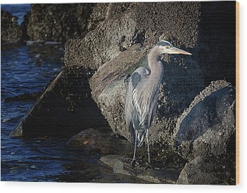 Wood Print featuring the photograph French Creek Heron by Randy Hall