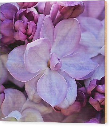 French Lilac Flower Wood Print