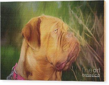 French Mastiff  Wood Print by Eleanor Abramson