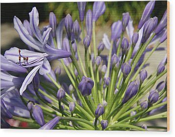 Wood Print featuring the photograph French Quarter Floral by KG Thienemann