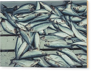 Wood Print featuring the photograph Fresh Caught Herring Fish by Edward Fielding