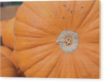 Fresh Organic Orange Giant Pumking Harvesting From Farm At Farme Wood Print