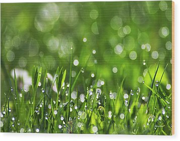 Fresh Spring Morning Dew Wood Print by Christina Rollo