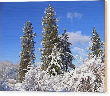 Wood Print featuring the photograph Fresh Winter Solitude by Will Borden