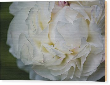Freshly Cut Peony Wood Print