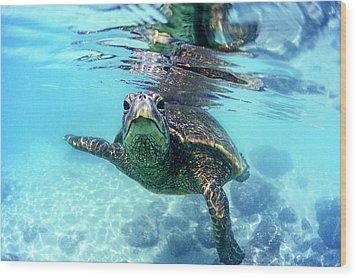friendly Hawaiian sea turtle  Wood Print by Sean Davey