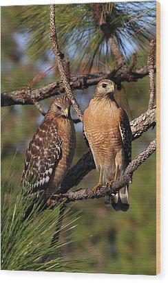 Friendly Raptors Wood Print