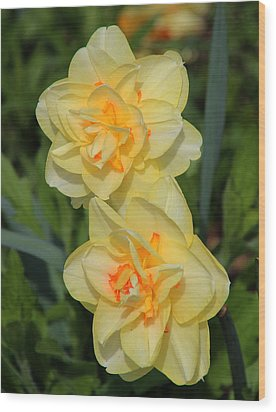 Friendship Daffodils Wood Print by Rosanne Jordan