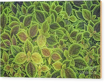 Friendship Plant Wood Print