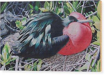 Frigate Bird  Wood Print by Constance Drescher
