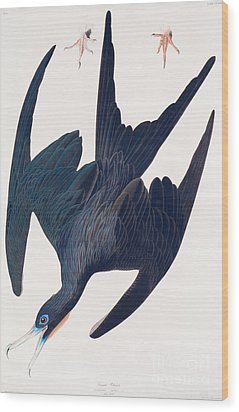 Frigate Penguin Wood Print by John James Audubon