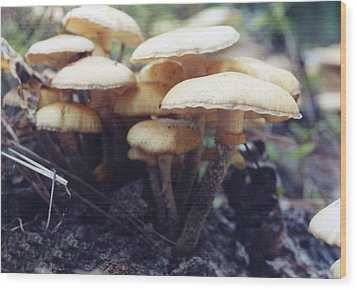 Frills And Trills Wood Print by Jan Amiss Photography