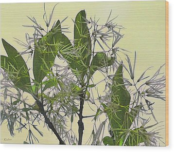 Fringe Tree Wood Print