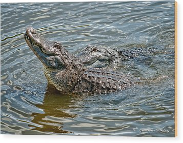Wood Print featuring the photograph Frisky In Florida by Christopher Holmes