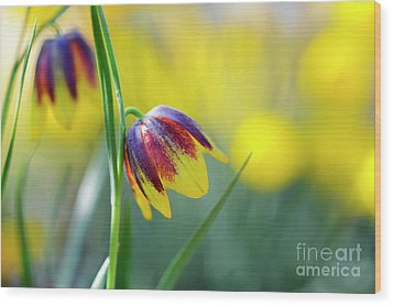 Wood Print featuring the photograph Fritillaria Reuteri by Tim Gainey
