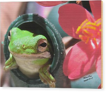 Frog At Selby Wood Print by Michele Penn