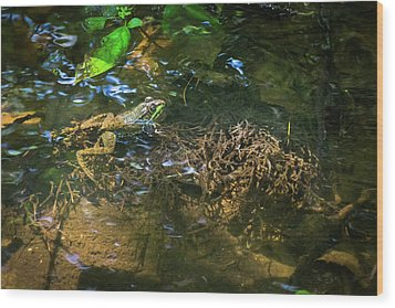 Wood Print featuring the photograph Frog Days Of Summer by Bill Pevlor