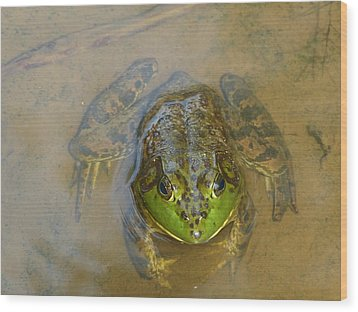 Wood Print featuring the photograph Frog Of Lake Redman by Donald C Morgan