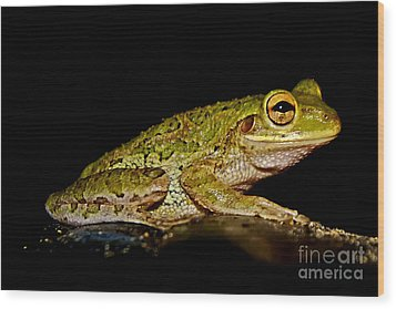 Wood Print featuring the photograph Cuban Tree Frog by Olga Hamilton