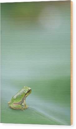 Frog On Leaf Of Lotus Wood Print by Naomi Okunaka
