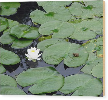 Frog On Lily Pad Wood Print