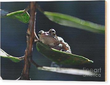 Frog With Twinkle In Eye Wood Print by Wayne Nielsen