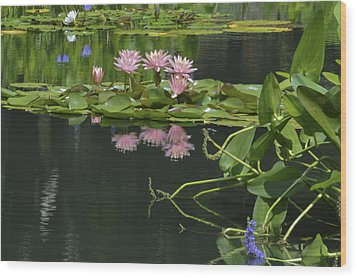 Water Lily Reflections Wood Print by Linda Geiger