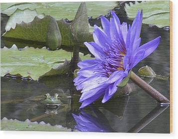 Frog With Water Lily Wood Print by Linda Geiger