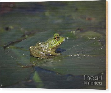 Wood Print featuring the photograph Froggy 2 by Douglas Stucky