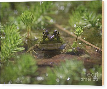 Wood Print featuring the photograph Froggy by Douglas Stucky