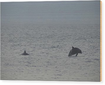 Frolicking Dolphins Wood Print by Bill Cannon