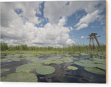 From A Frog's Point Of View - Lake Okeechobee Wood Print by Christopher L Thomley