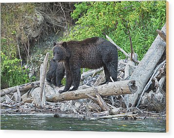From The Great Bear Rainforest Wood Print