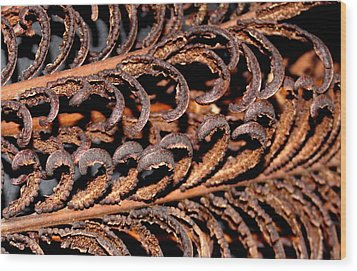 Wood Print featuring the photograph Fronds  by Diane Merkle