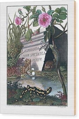 Frontis Of Historia Naturalis Ranarum Nostratium Wood Print
