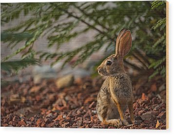 Wood Print featuring the photograph Frontyard Bunny by Dan McManus