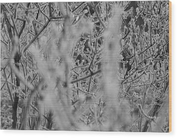 Frost 2 Wood Print by Antonio Romero